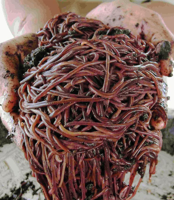 All about our Worms