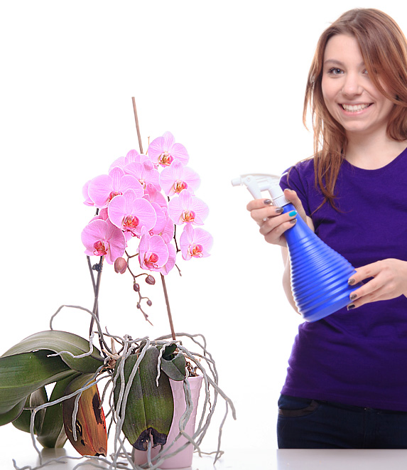 What to know about ORCHID fertilization