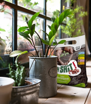 How to replant INDOOR PLANTS