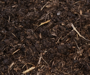 All about Organic Compost