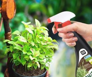 How to grow in a store purchased HERBS